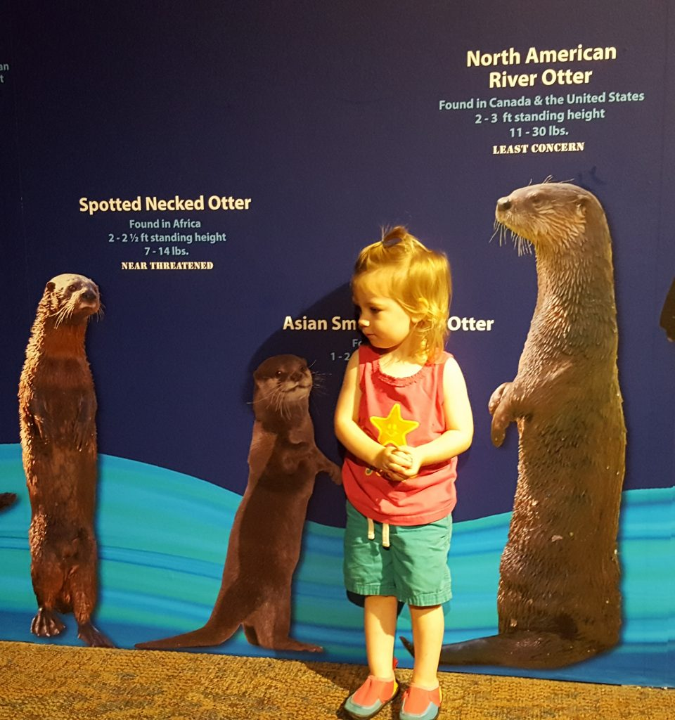 Elise standing in front of a picture of various otters comparing her height.