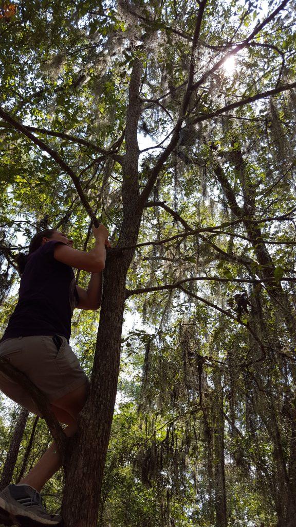 Amanda up a tree
